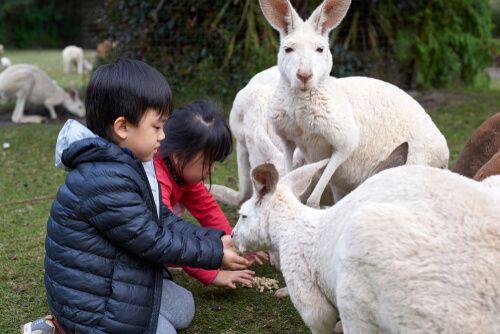 Say hello to the animals at Caversham Wildlife Park